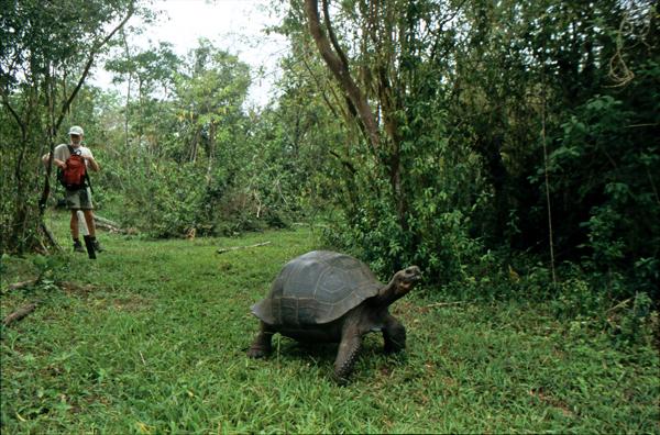 Galapagos026