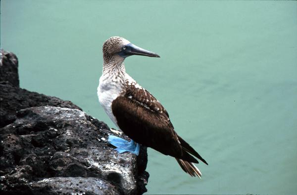 Galapagos041