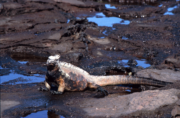 Galapagos103