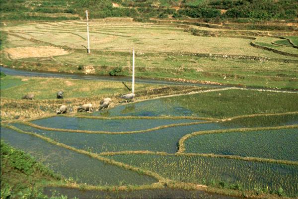 Vietnam 02071