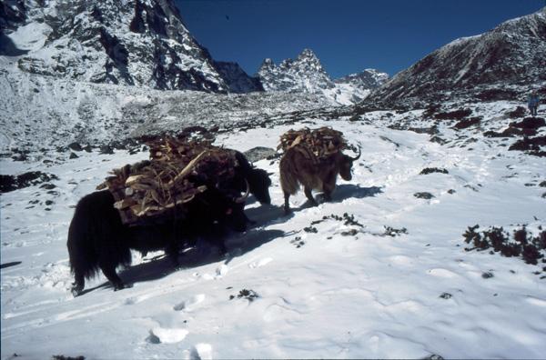 1987-Nepal425