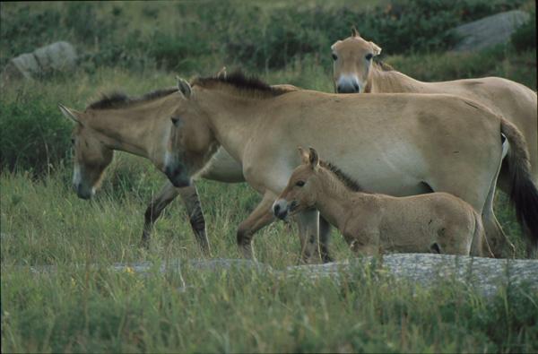 2000-Mongolei011