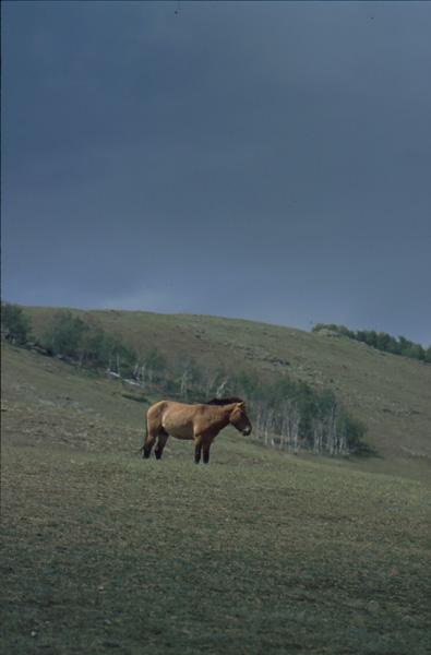2000-Mongolei317
