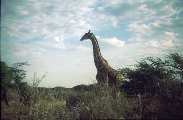 Namibia-02034