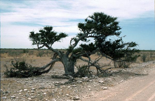Namibia-02081