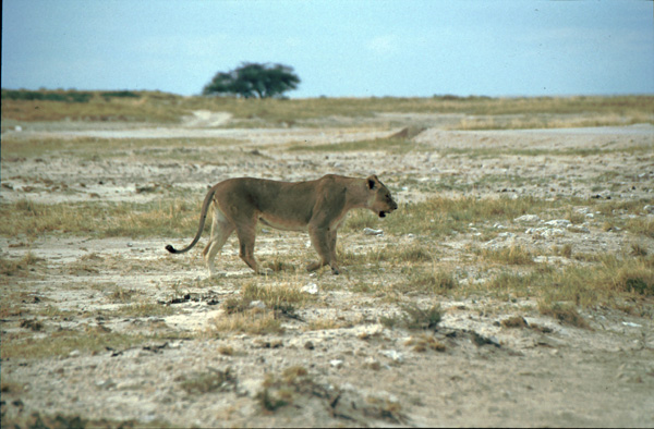 Namibia-02105