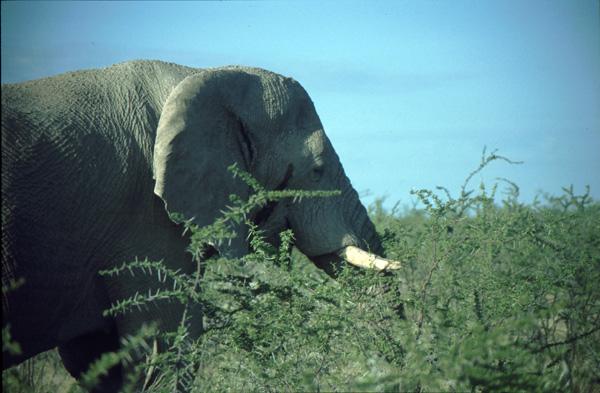 Namibia-02132