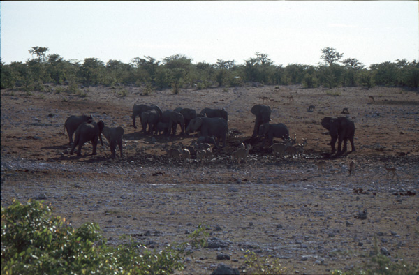 Namibia-02137