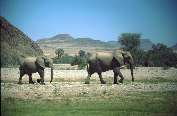 Namibia-02294