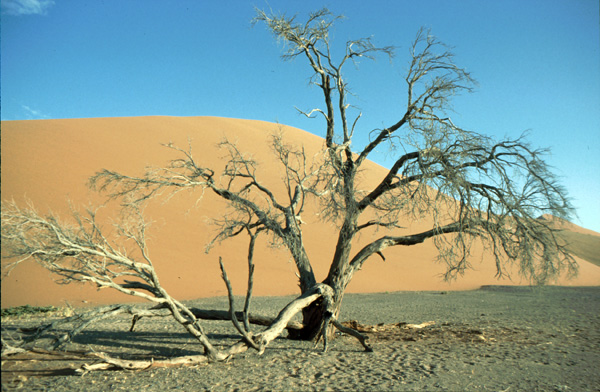 Namibia-02369