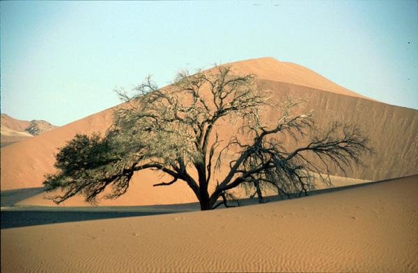 Namibia-02371
