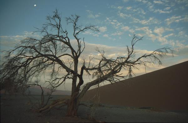 Namibia-02375