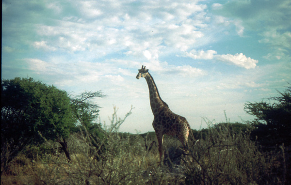 Namibia-02400