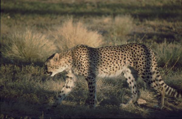 Namibia-02417
