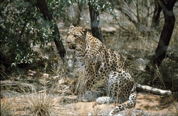 Namibia-02513