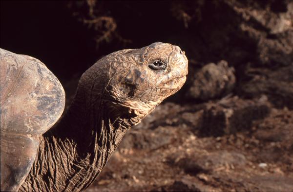 Galapagos023