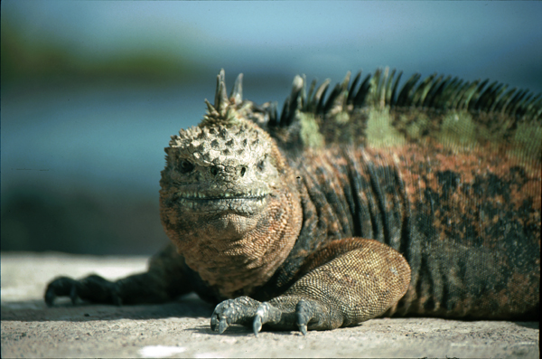 Galapagos048