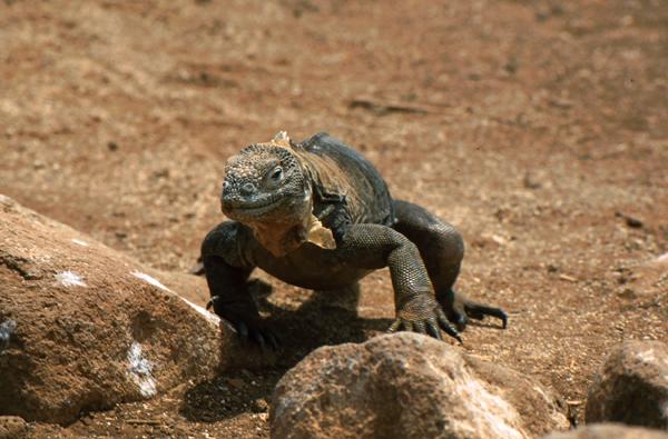 Galapagos066