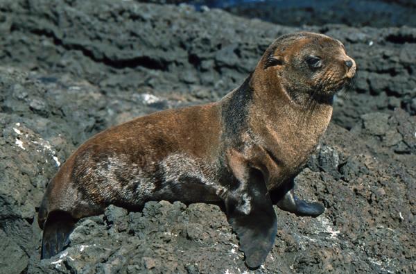 Galapagos098