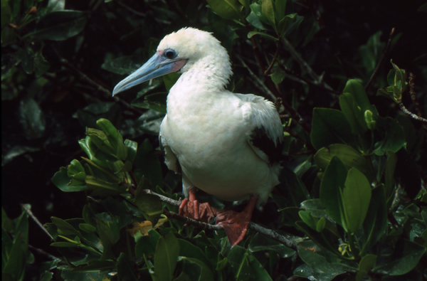 Galapagos155