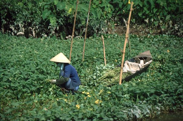 Vietnam 02299