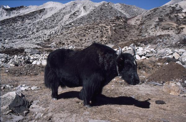 1987-Nepal327