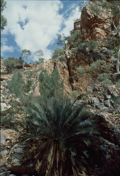 1992-Australien059