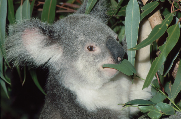 1992-Australien340