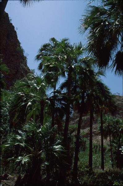 1993-Australien307