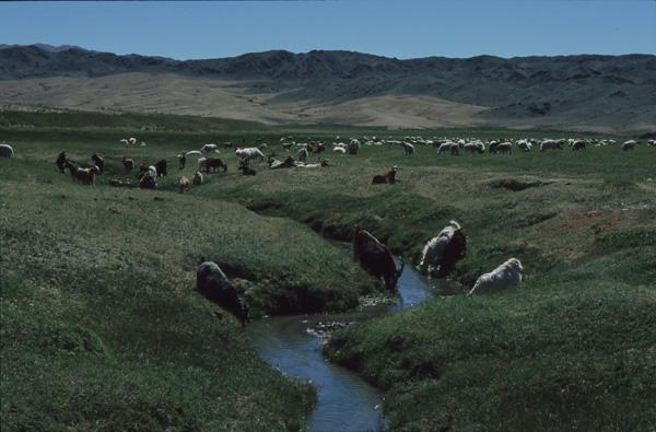 2000-Mongolei-B500