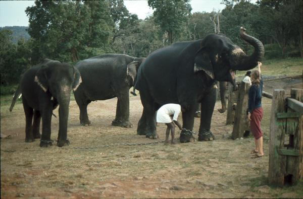 Indien-82135