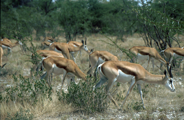 Namibia-02071