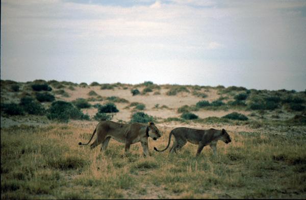 Namibia-02101