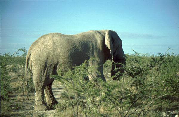 Namibia-02131