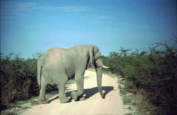 Namibia-02134