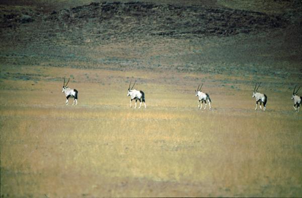 Namibia-02293