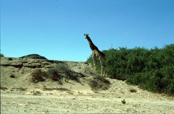 Namibia-02306