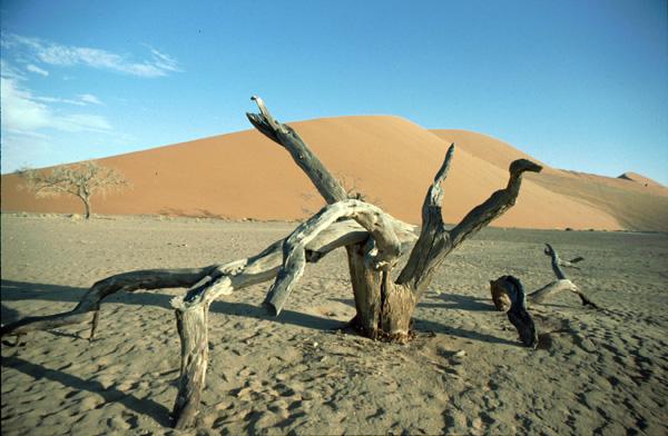 Namibia-02368