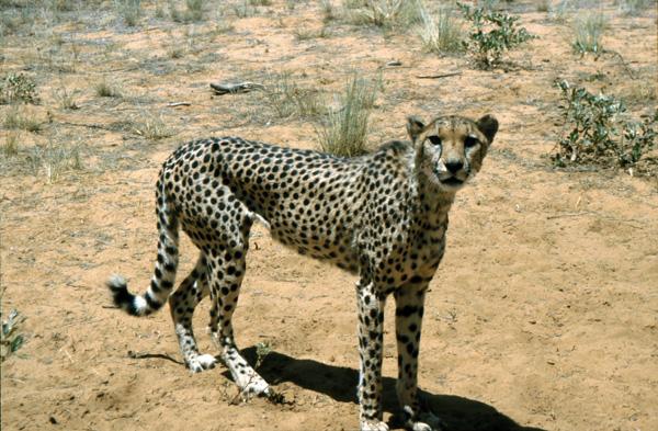 Namibia-02501